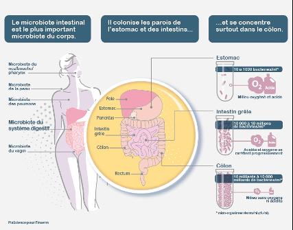 Explication du microbiote dans le corps